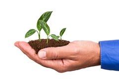 Homme d'affaires Holding Soil et usine Photo stock