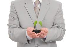 Homme d'affaires jugeant la plante verte d'isolement Photographie stock libre de droits