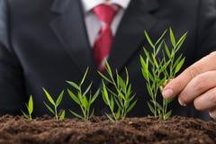 Homme d'affaires plantant le jeune arbre Photographie stock libre de droits