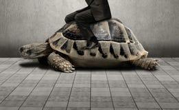 Homme d'affaires s'asseyant sur la tortue Photographie stock libre de droits