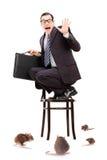 Homme d'affaires terrifié se tenant sur la chaise au milieu de l'inv de rat Photographie stock
