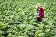 Homme d'agriculteur avec la position d'ordinateur portable sur le tabac de champ, concept d'examiner la croissance du tabac photographie stock libre de droits