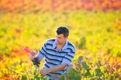 Homme d'agriculteur dans des feuilles d'automne de récolte de vignoble dans méditerranéen Photographie stock libre de droits