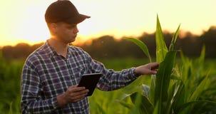 Homme d'agriculteur lu ou analyse un rapport dans la tablette sur un champ d'agriculture avec le ton de vintage sur une lumi?re d banque de vidéos