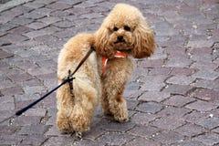 Homme d'ami de chien Photographie stock libre de droits