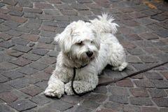 Homme d'ami de chien Photo stock