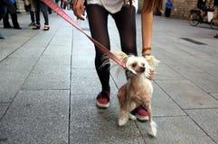 Homme d'ami de chien Image libre de droits