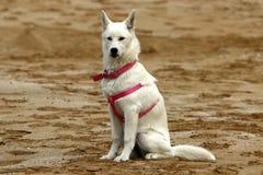 Homme d'ami de chien Photographie stock