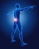 homme 3D médical Images libres de droits