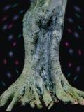 Homme dans l'arbre Images libres de droits