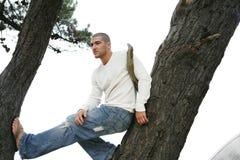 Homme dans l'arbre Image stock