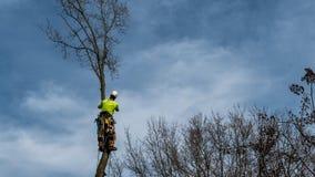 Homme dans l'arbre avec la tronçonneuse photo libre de droits