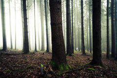 Homme dans la forêt à l'aube Photo libre de droits