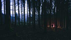 Homme dans la forêt Photographie stock libre de droits