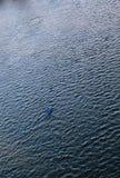 Homme dans le canoë Photographie stock libre de droits