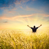 Homme dans le domaine de blé photos stock