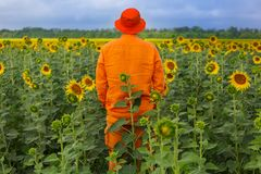Homme dans le domaine de tournesols Photos libres de droits