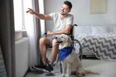 Homme dans le fauteuil roulant avec le chien de service Photos stock