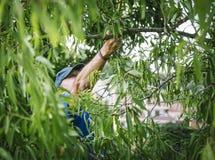 Homme dans un arbre d'amande avec une boîte Image libre de droits