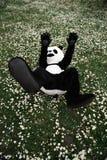 Homme dans un costume de panda se trouvant sur les fleurs d'herbe verte et de camomille images libres de droits