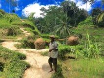Homme de Balinese aux terrasses de riz de Tegallalang dans Ubud Bali Images libres de droits