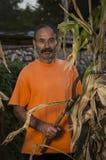 Homme de campagne dans le maïs Photos stock