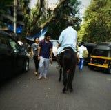 Homme de cheval Photos stock