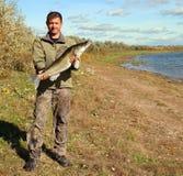 Homme de pêche avec de grands poissons de zander Photographie stock