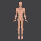 Homme de robot, cyborg masculin, caractères de technologie, humanoïde plat d'avenir, corps mécanique de chrome Images libres de droits