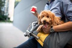 Homme de sourire bel s'asseyant sur une bicyclette sur la rue et le café potable photos stock
