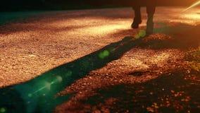 Homme de sport courant ? la route goudronn?e Parc rural de ville Rayons verts de for?t et de soleil d'arbre sur l'horizon banque de vidéos