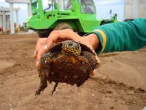 Homme disponible de tortue photo stock