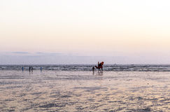 Homme et chameaux dans la Karachi Images libres de droits