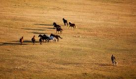 Homme et chevaux photographie stock