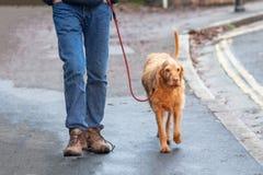 Homme et chien sur une promenade photo stock