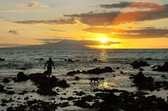 Homme et crabot au coucher du soleil Images stock