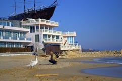 Homme et cygne sur la plage Images stock