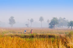 Homme et femme ruraux indiens Photos libres de droits