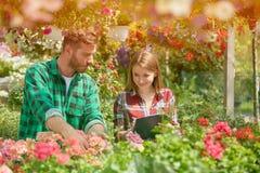 Homme et femme travaillant avec des fleurs de jardin Photo stock