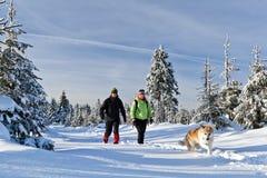 Homme et femme trimardant avec le crabot en hiver Photo libre de droits