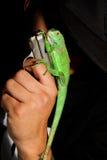 Homme et iguane Photo stock
