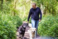 Homme exerçant des chiens sur la promenade de campagne photo stock