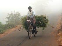 Homme indien portant l'herbe verte Photographie stock libre de droits