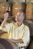 Homme inspectant la qualité du vin rouge dans la cave Images libres de droits