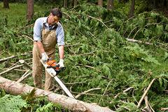 Homme limbing les arbres avalés Photographie stock libre de droits