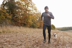 Homme mûr courant autour d'Autumn Field With Pet Bulldog Photo stock