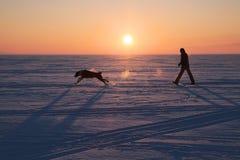 Homme marchant avec un chien Photographie stock libre de droits