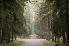 Homme marchant dans la belle forêt Photos libres de droits