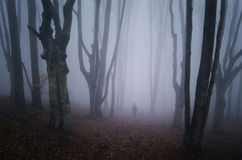 Homme marchant dans la forêt effrayante avec le brouillard Images stock