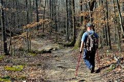 Homme marchant par la forêt de bois dur Photo stock